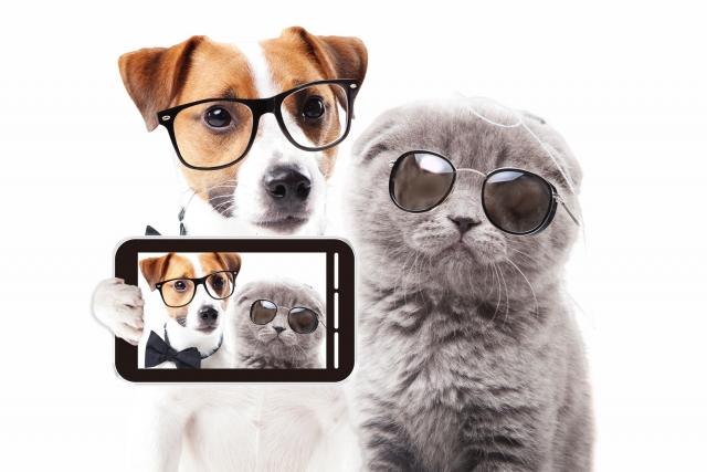 犬と猫がサングラスを付けている写真の画像