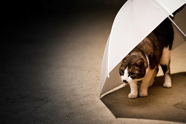感情を取り戻そうと頑張っている傘に隠れた猫の画像