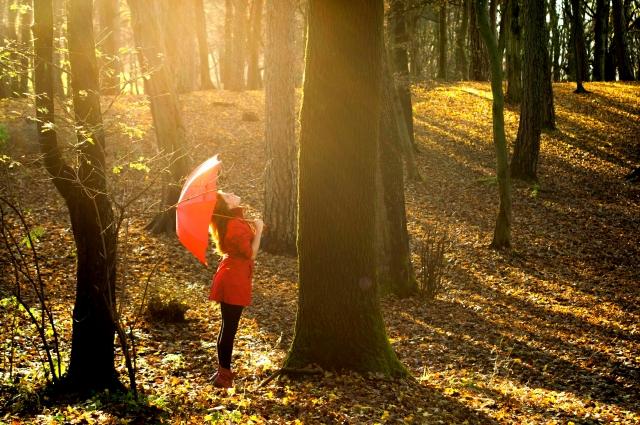 日が差した森の中で赤い傘を開いている女性の画像