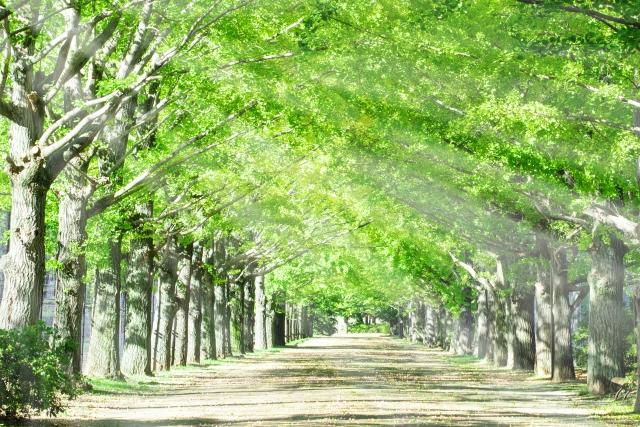 日差しが差し伸べる森林の画像