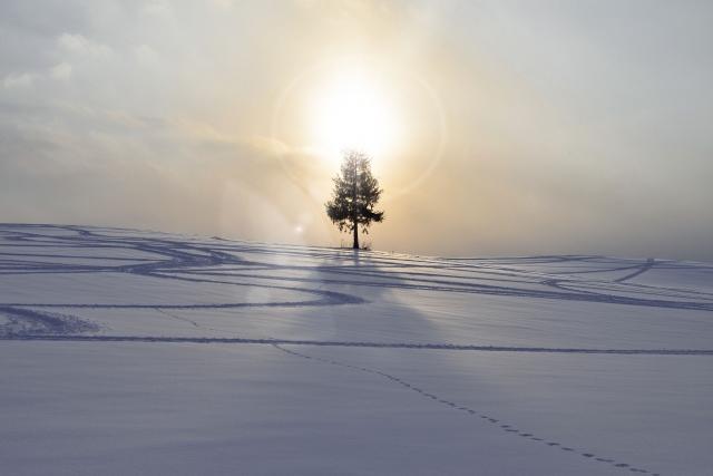 雪景色の中に大きな木がある画像