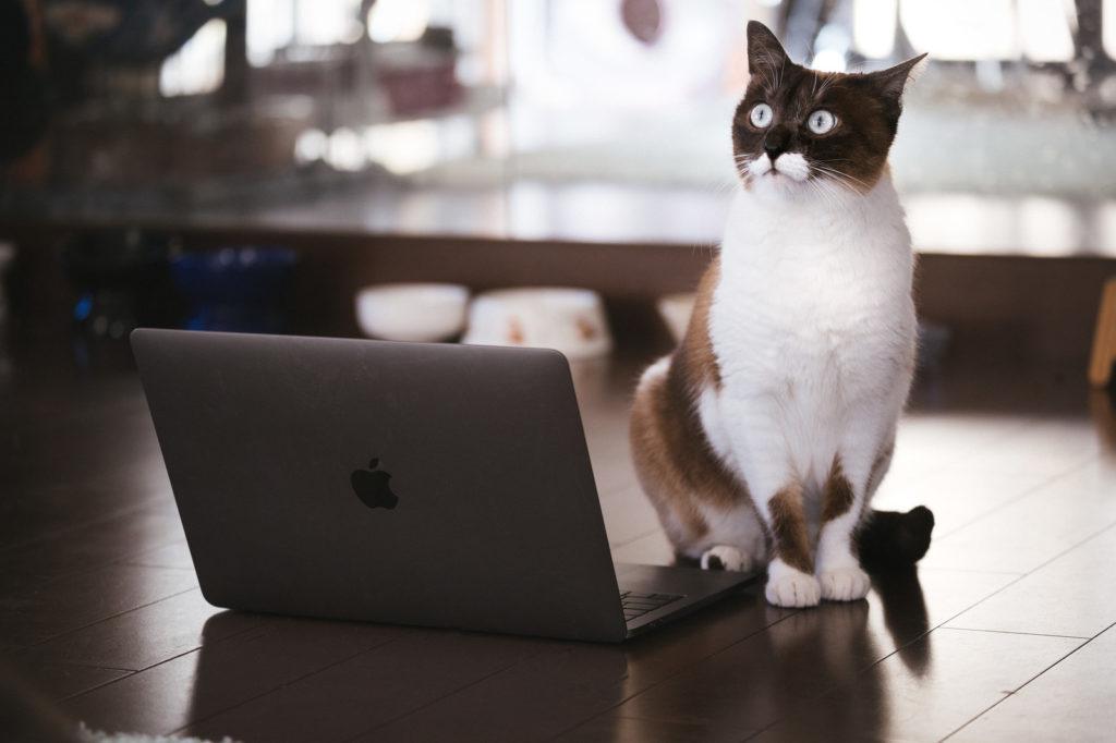 パソコンの前に猫が座っている画像