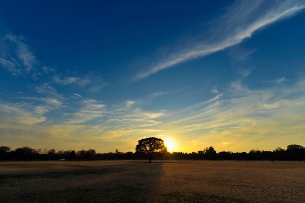夕日に染まる大きな木の画像