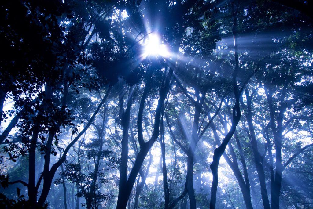 神秘的な木漏れ日の画像