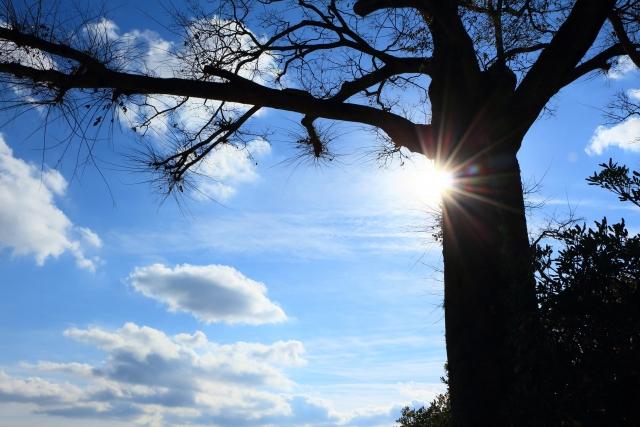 青空と木漏れ日の画像