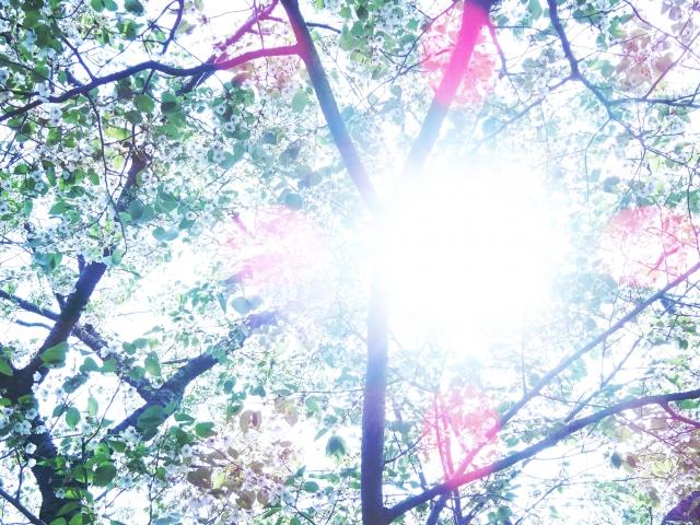 心が浄化するような木漏れ日の画像