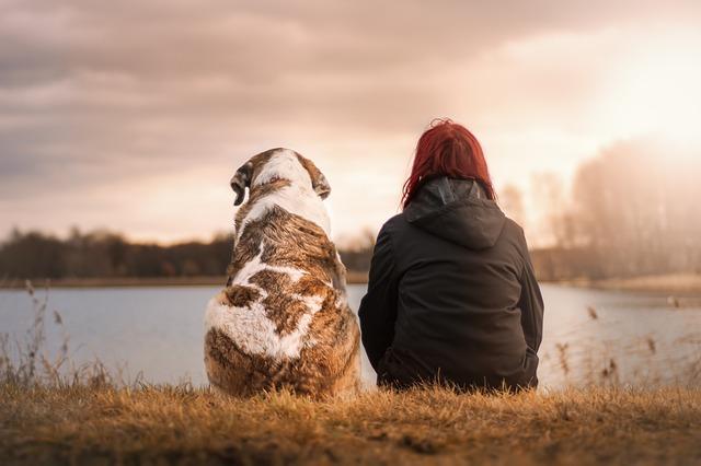 湖と犬と女性の後ろ姿の画像