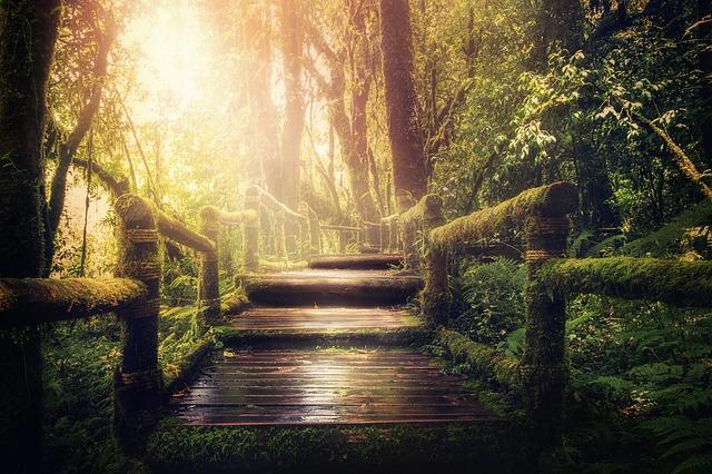 神秘的な森林の中の道の画像