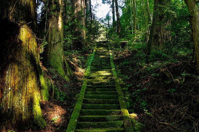 神社に続く森林の中の道の画像
