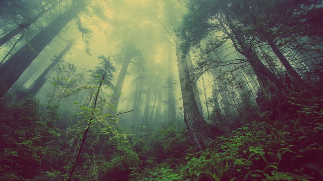 神秘的な森の画像