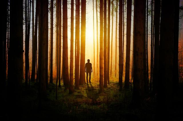 森の中で抜け出せなくなっている人の画像