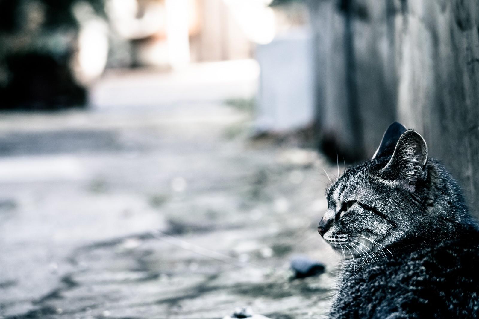 つまらないそうな表情をしている猫の画像