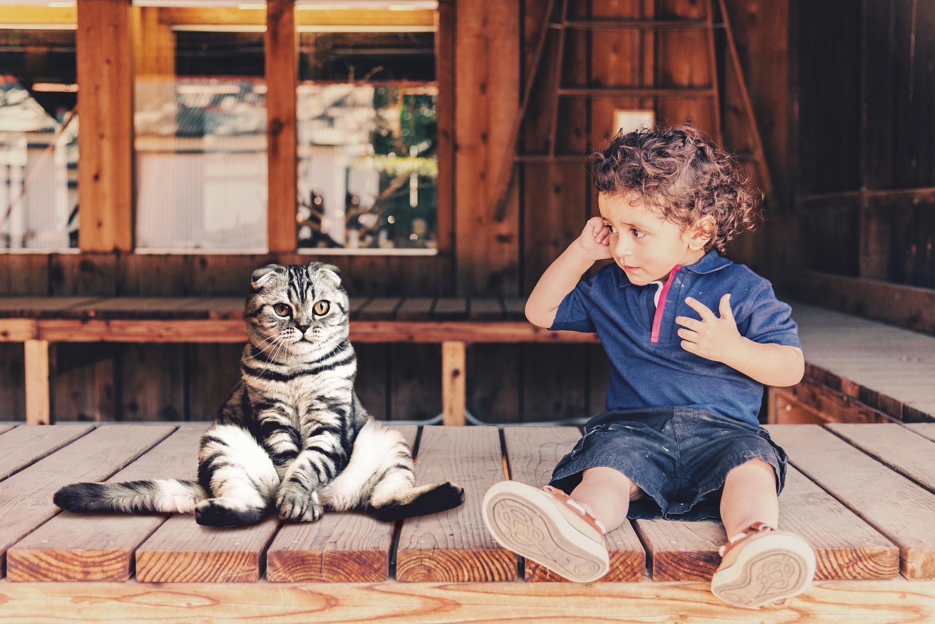 友達が少ない子供と猫の画像