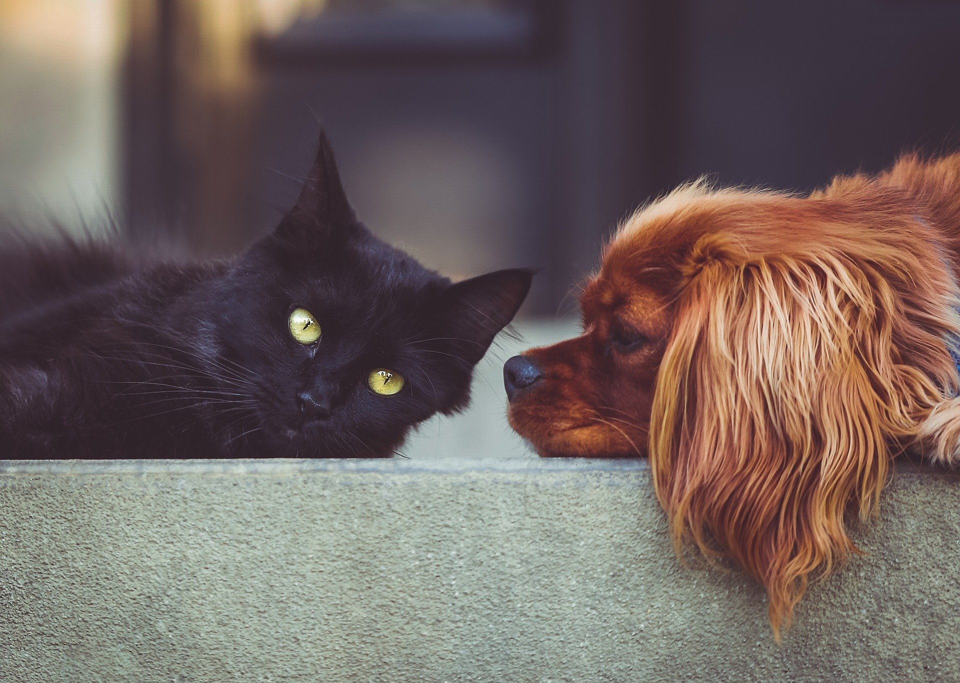 猫と犬の友達のように仲良さそうな画像