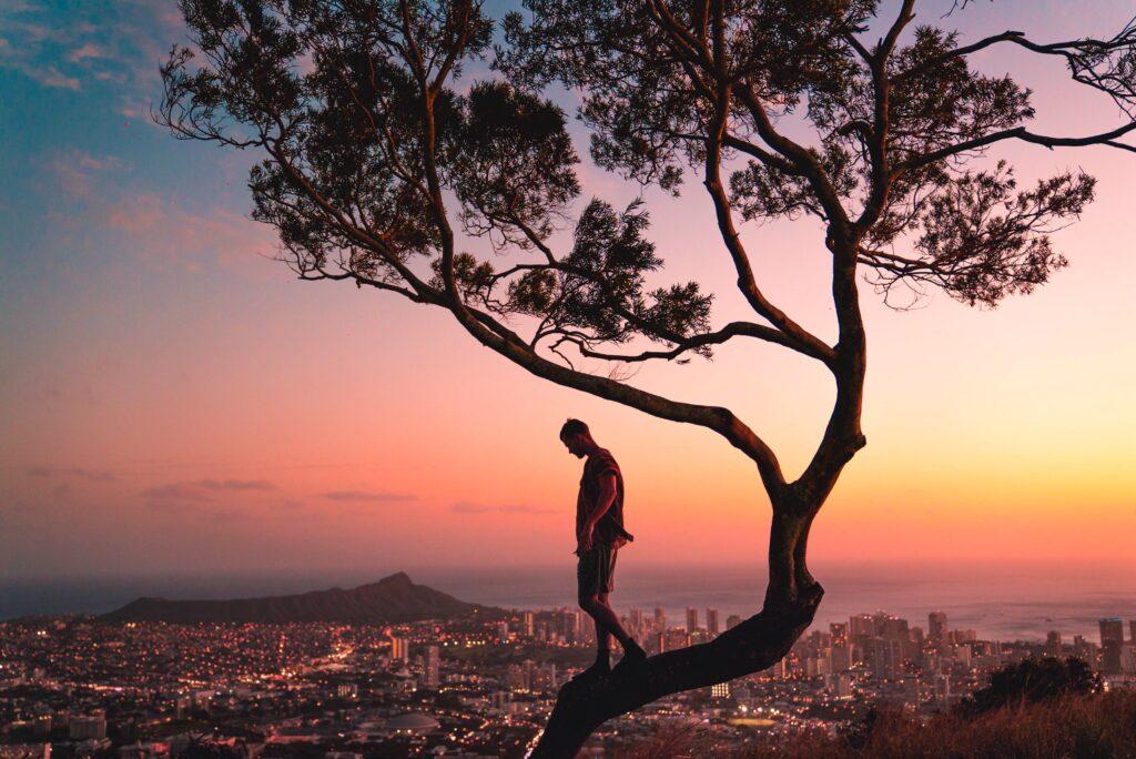 木の上に立っている男性のシルエットの画像